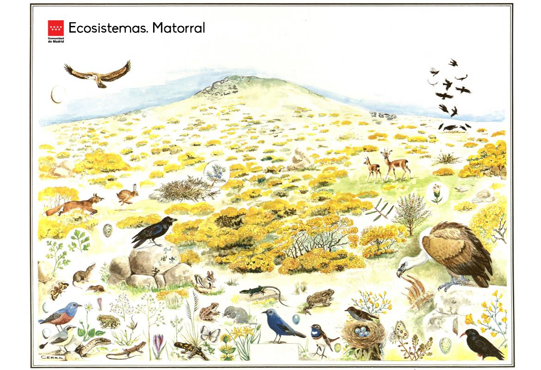 Ecosistemas. Matorral