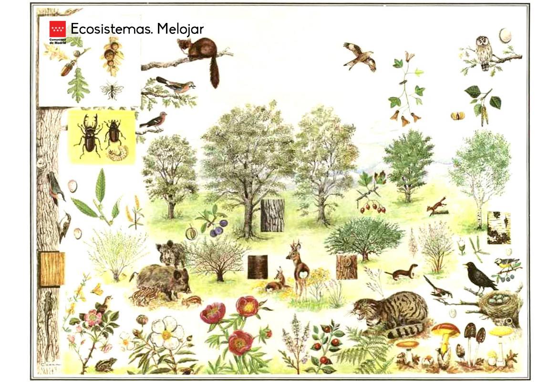 Ecosistemas. Melojar