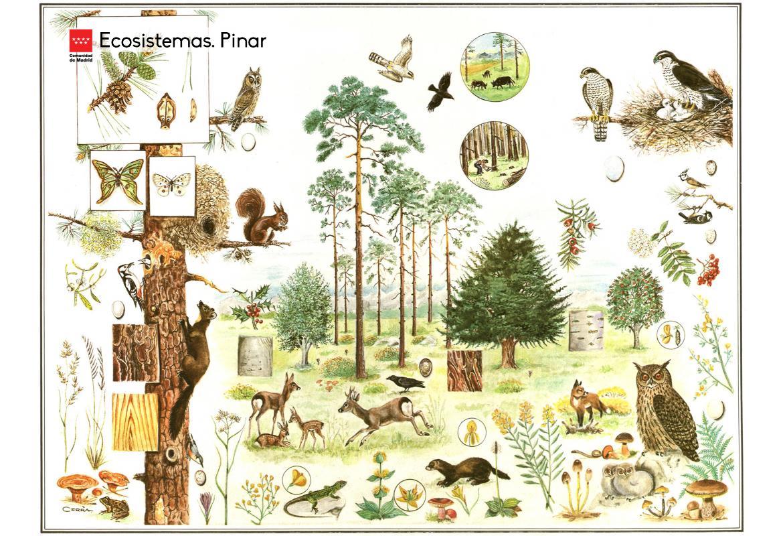 Ecosistemas. Pinar