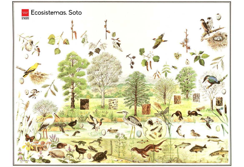 Ecosistemas. Soto