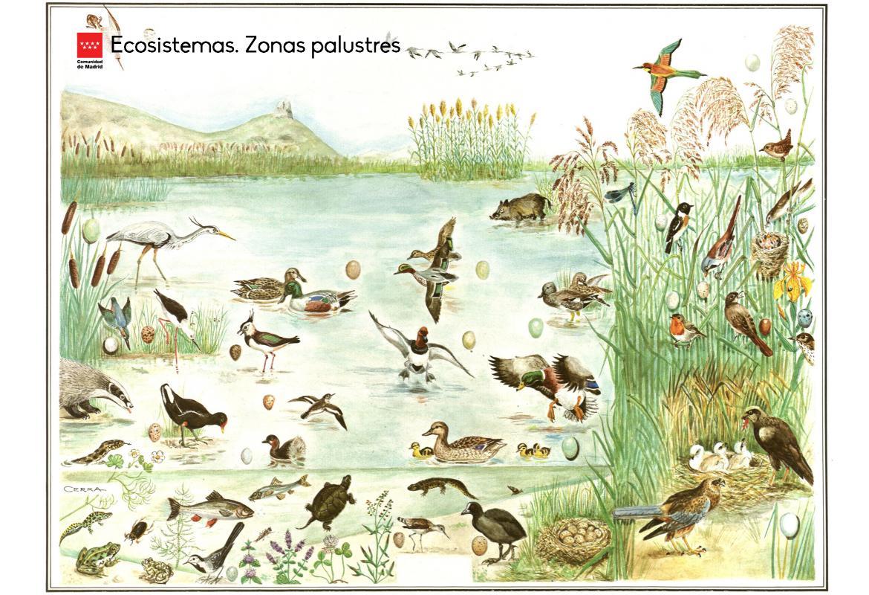 Ecosistemas. Zonas palustres