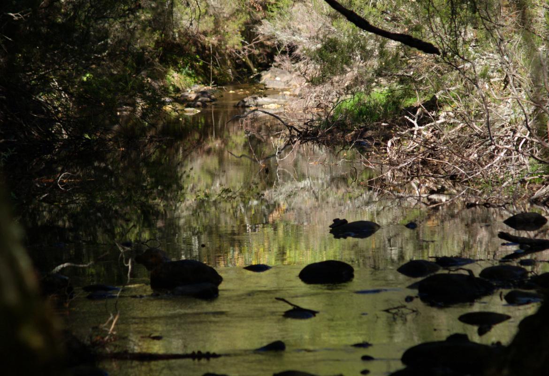 Luces y sombras río Jarama en el Hayedo