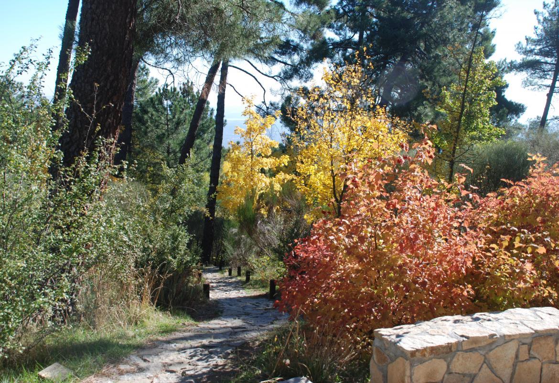 Arboreto Luis Ceballos detalle_otoño