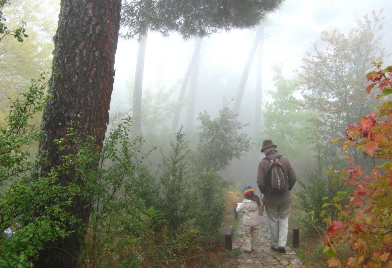 Museo Vivo de Especies Forestales. Visita