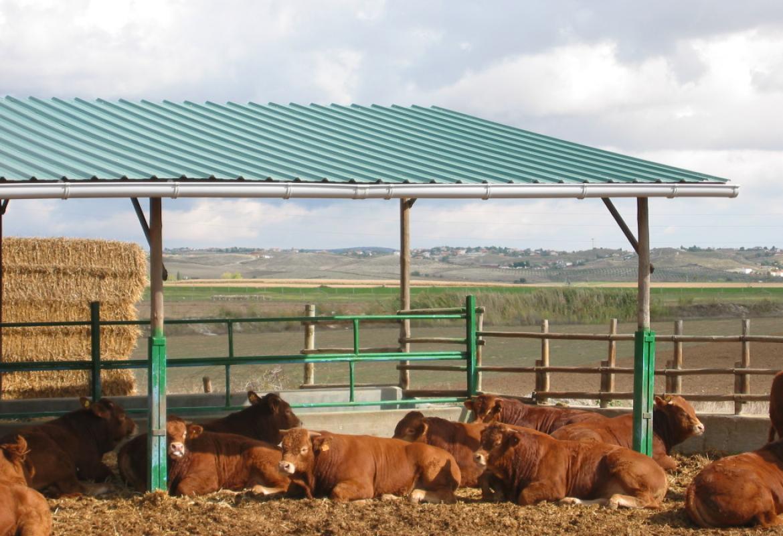 vacas en un centro de testaje
