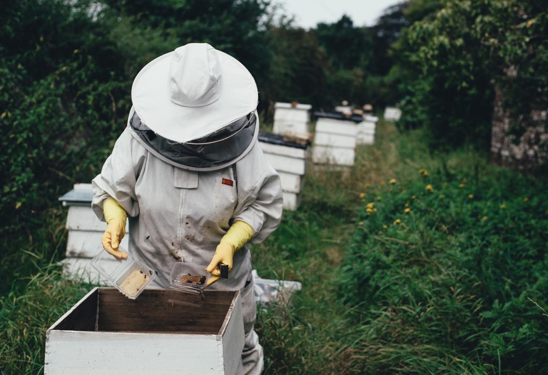Apicultor trabajando en el campo