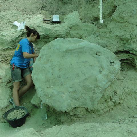 Imagen de tortuga gigante en el Batallón 3
