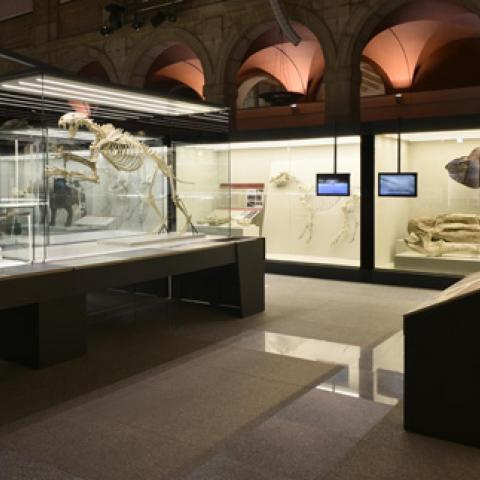 Imagen de la exposición de Batallones en 2017-2018