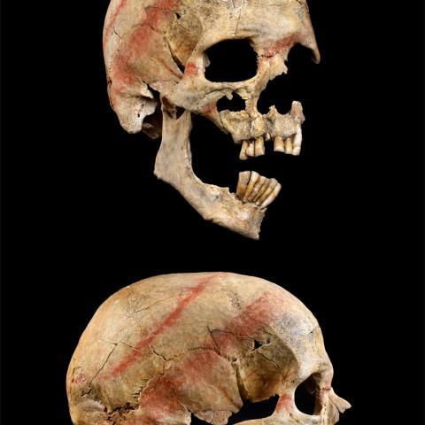Cráneo de la tumba 5 con bandas de cinabrio