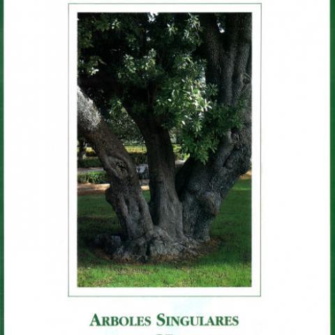 Ref-03053 Árboles singulares de Madrid
