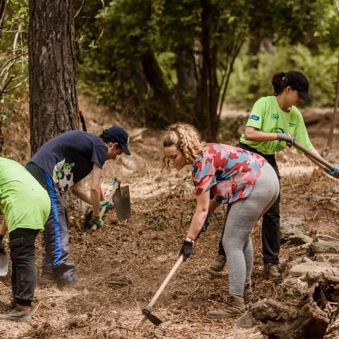 Grupo de jóvenes realizando trabajos en el campo