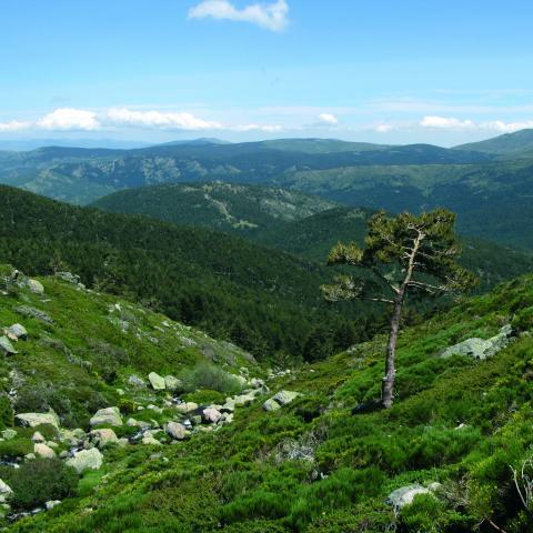 Parque Nacional de la Sierra de Guadarrama. Arroyo Peñalara