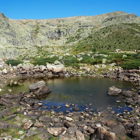 Humedales_Macizo de Peñalara. Laguna Chica_Rascafría