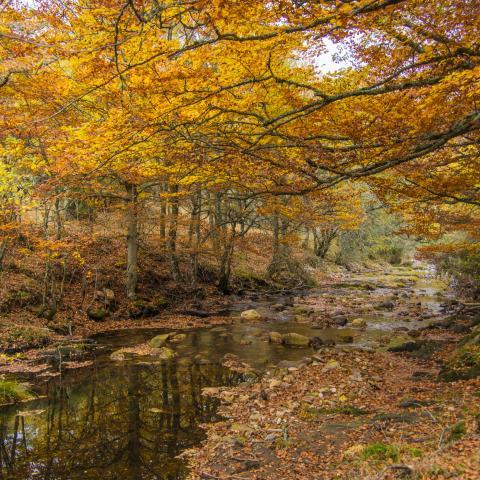Reserva de la Biosfera Sierra del Rincón. Hayedo de Montejo