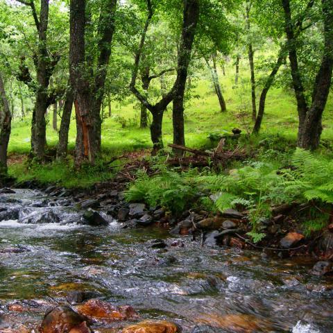 Reserva de la Biosfera Sierra del Rincón. Paisaje con río