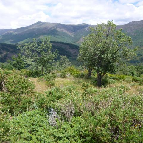 Reserva de la Biosfera Sierra del Rincón. Paisaje