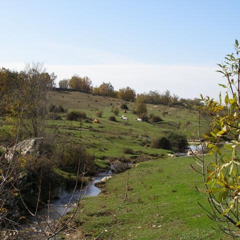 Reserva de la Biosfera Sierra del Rincón. Paisaje con vacas