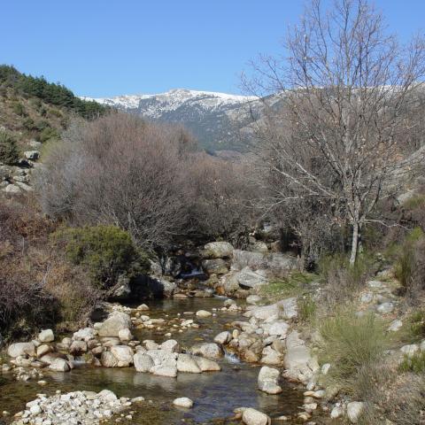Parque Regional de la cuenca alta del Manzanares. Arroyo Mediano