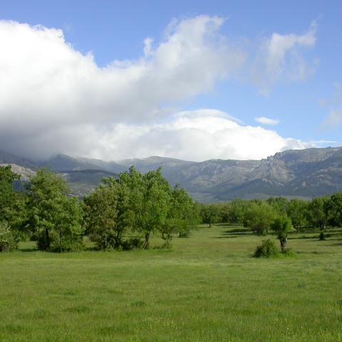 Parque Regional de la cuenca alta del Manzanares. Dehesa