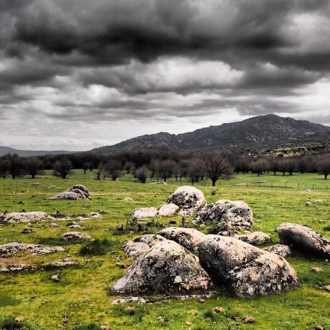 Parque Regional de la cuenca alta del Manzanares. Dehesa de fresno