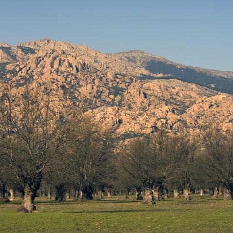 Parque Regional de la cuenca alta del Manzanares. Dehesas del Soto