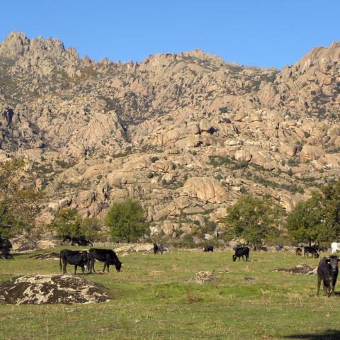 Parque Regional de la cuenca alta del Manzanares. Ganadería extensiva