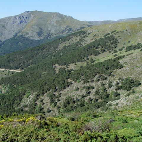Parque Regional de la cuenca alta del Manzanares. La Morcuera
