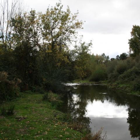 Parque Regional del curso medio del río Guadarrama y su entorno. Senda del Retamar