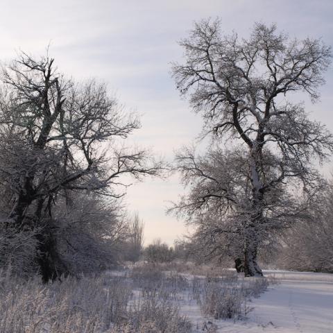 Parque Regional del Sureste_Soto de las Juntas nevado