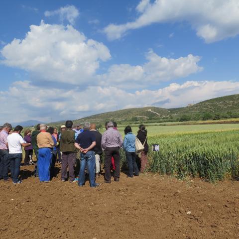 asistentes a la jornada para observar distintos cultivos de cereales