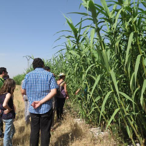 personas asistiendo a una explicación sobre la bioeconomía en un cultivo de caña