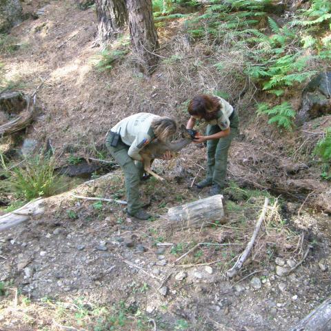 Imagen de dos agentes forestales recogiendo un corzo.