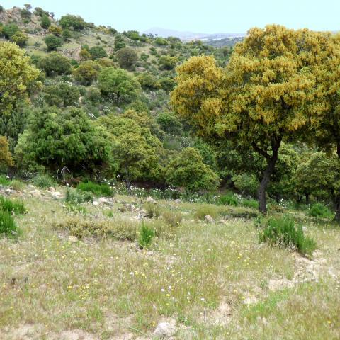Parque Regional de la cuenca alta del Manzanares. Cañacerral