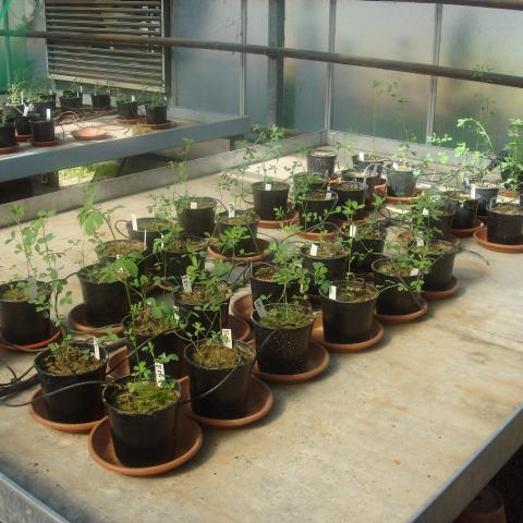 Ensayos de bioacumulación