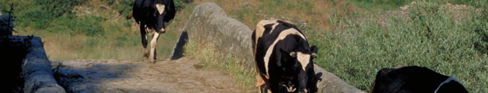 Facilitar el acceso a las ayudas europeas al sector agricola y ganadero