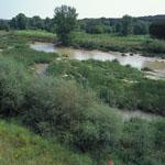 Plan de Gestión de la ZEC Cuenca del río Guadarrama