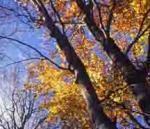 Patrimonio forestal