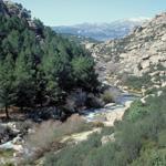 Plan de Gestión de la ZEC Cuenca del río Manzanares y las ZEPA Monte de El Pardo y Soto de Viñuelas